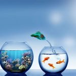 free-fish